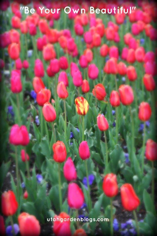 Mismatched tulip